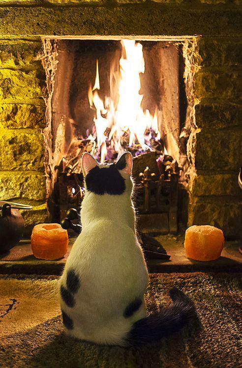 Кот и камин